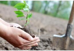 В апреле озеленители высадят около 3,5 тыс. деревьев и 5,5 тыс. кустарников