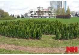 Осенью у зеленого лабиринта в форме карты Беларуси появится надпись «Беларусь»