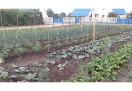 Продам капусту урожай 2018 г