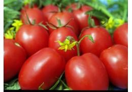 Продам томаты (помидоры) открытого грунта