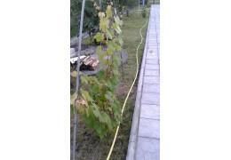 """Поливочный шланг желтый Ø1"""" (25мм) 50 метров - Польша."""
