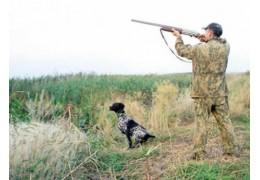 С 11 августа разрешат охотиться на водоплавающую дичь