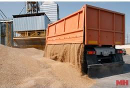 В ОАО «Гастелловское» самая высокая урожайность зерновых по стране