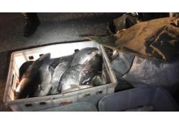 В Оршанском районе задержали браконьеров-сетевиков с уловом почти 90 кг