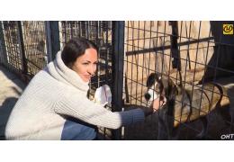 Почему я стала волонтёром и спасаю животных?
