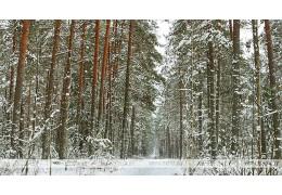 Свыше 450 нарушений в лесах Беларуси в январе-ноябре помогли выявить фотоловушки