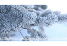 До -13°С ожидается в Беларуси ночью 25 декабря