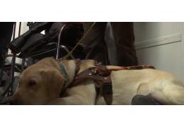 В Екатеринбурге снова потребовали деньги с незрячего пассажира за собаку-поводыр