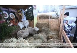 В Гродно впервые появился живой рождественский вертеп