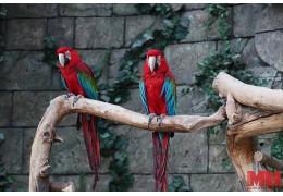 Международный день без Интернета минчан приглашают провести в зоопарке