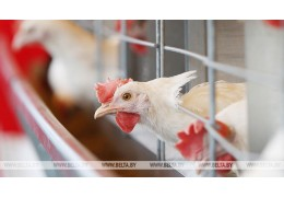 Беларусь ограничила ввоз птицы из Краснодарского края из-за болезни Ньюкасла