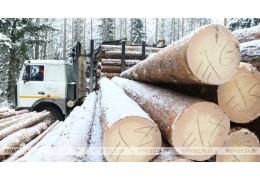 Лесхозы Гомельской области на 10% увеличили объем реализации древесины в 2018 г