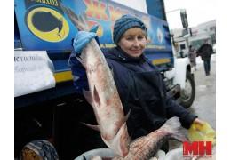 Рыбная ярмарка развернется в выходные в Минске