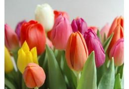 К 8 Марта в Минске организуют 200 торговых точек для продажи цветов
