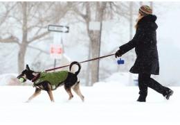 Наше «собачье дело». Пчему минчане не любят убирать за питомцами на улице