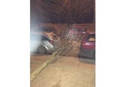 Штормовой ветер в столице снес оградительные щиты и вырвал с корнем дерево