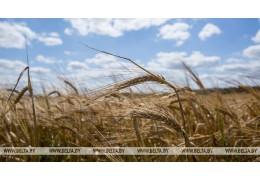 Экспорт белорусской продукции растениеводства в 2018 году вырос на 16%