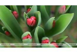 Минчан проконсультируют 6 марта по вопросам озеленения