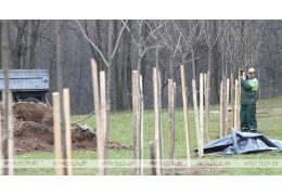 В населенных пунктах Гомельской области высадят 46 тыс. деревьев и кустарников