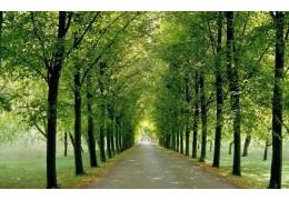 В Первомайском планируют высадить аллею в честь 50-летия района