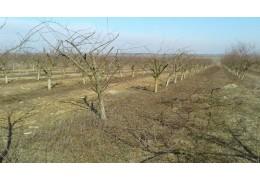 Обрезка и формирование кроны деревьев услуги по г.  Бресту (району)
