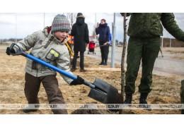 Аллея семейных деревьев появилась во Фрунзенском районе Минска