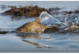 Штраф от 5 до 50 базовых величин грозит за запрещенные орудия рыболовства