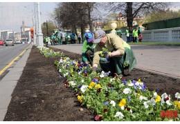 Городское ЖКХ украсит Минск миллионом цветов ко II Европейским играм