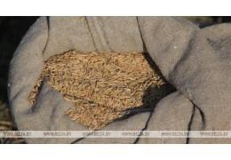 В Гродненском районе трое молодых людей похитили со склада свыше 800 кг зерна