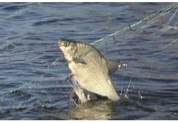 Жители Минска и области добровольно сдают запрещенные к рыболовству сети.