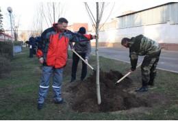 Заводчане и администрация Партизанского района обновили аллею славы и почета