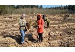 В Беларуси началась неделя леса. Минские экологи поучаствовали в посадках