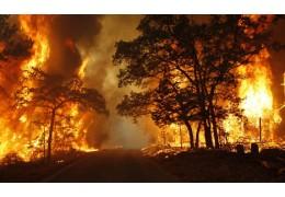Лесные пожары. Более 100 случаев зафиксировано в республике с начала года