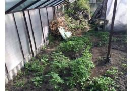 Правоохранители обнаружили на участке брестчанина теплицу с растениями конопли