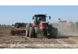 Яровой сев в Беларуси проведен на более чем 80% площадей
