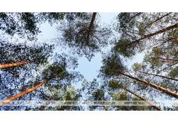 Запрет на посещение лесов полностью снят в Гомельской и Могилевской областях