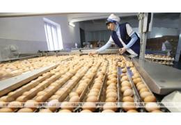 Россельхознадзор отменяет ограничения на поставки яиц 1-й Минской птицефабрики