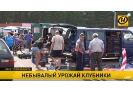 Почем клубника? Как государство помогает белорусам продать небывалый урожай ягод