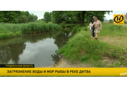 Что стало с рекой Дитва? Вода вдруг стала мутной, погибла рыба