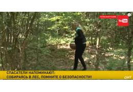 Сезон грибов, ягод и заблудившихся людей. В лесах Беларуси пропало 50 человек