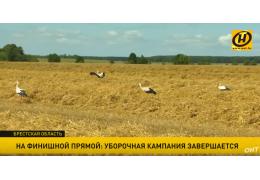 Уборочная в Брестской области: готовы взять 1,2 млн тонн