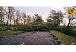 Непогода в Беларуси: 60 населенных пунктов без света, последствия ликвидируются