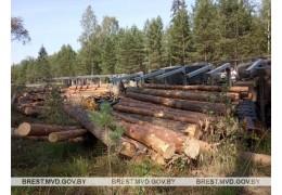 На лесной дороге опрокинулся грузовик с брёвнами