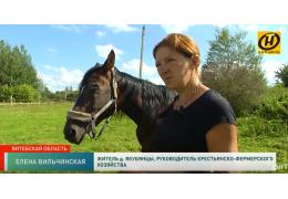 Последний приют для лошадок. Необычный хоспис спасает животных от бойни