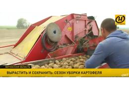 Зерновые убраны, очередь за яровым рапсом, травяными кормами и картофелем