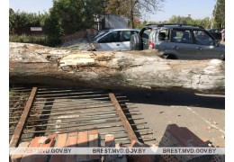 Сильный ветер стал виновником происшествия в Кобрин