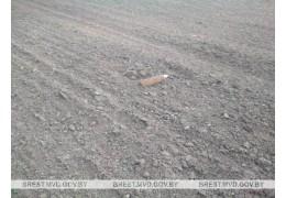 В Брестском и Кобринском районах были обнаружены боеприпасы