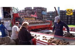 Урожай-2019. Картошки хватит всем!