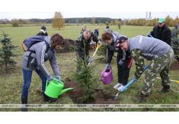 Более 30 тыс. деревьев и кустарников высадят работники Минприроды в дни акции