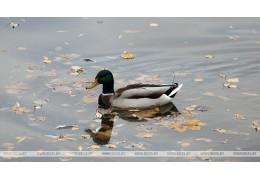 Гомельчан приглашают присоединиться к уборке территории у Волотовского озера